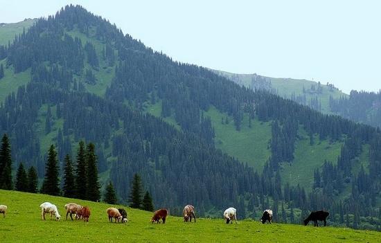 新疆导游资格面试景点导游词之那拉提景区