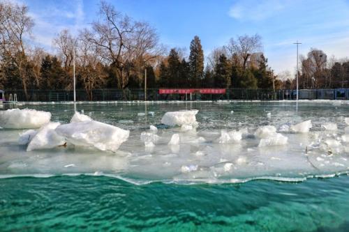"""清华的西湖游泳池,是校内的冬泳""""圣地""""。"""